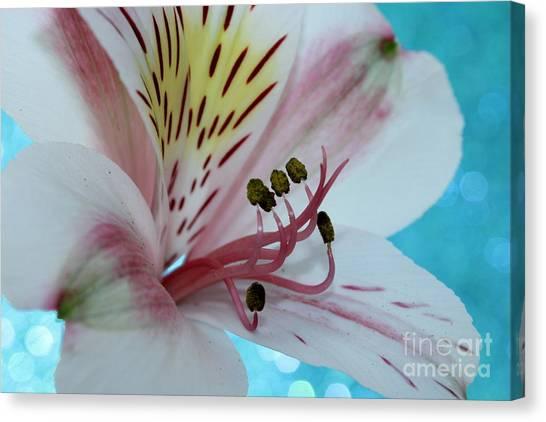 Amaryllis Canvas Print - Love Blossom by Krissy Katsimbras