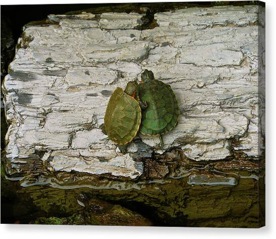 Love In A Shell Canvas Print