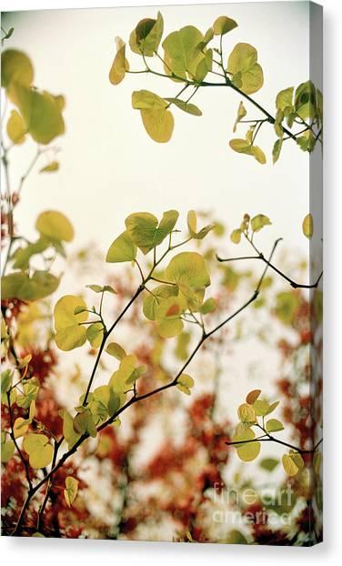 Love Leaf Canvas Print