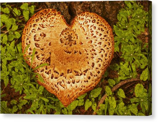 Shrooms Canvas Print - Love Of Nature by Jack Zulli