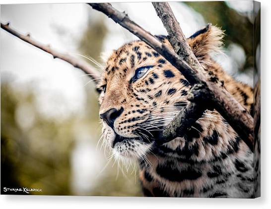 Canvas Print featuring the photograph Love Panther Iv by Stwayne Keubrick