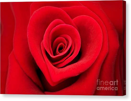 Passionate Canvas Print - Love Rose by Delphimages Photo Creations