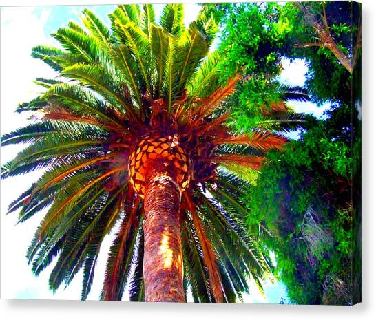 Love Under The Palm In San Diego Canvas Print