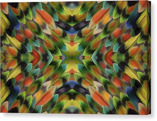 Lovebirds Canvas Print - Lovebird Tail Feather Pattern by Darrell Gulin