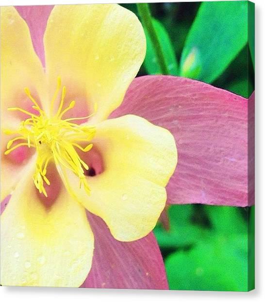 Flowers Canvas Print - Lovely Columbine Flower by Blenda Studio