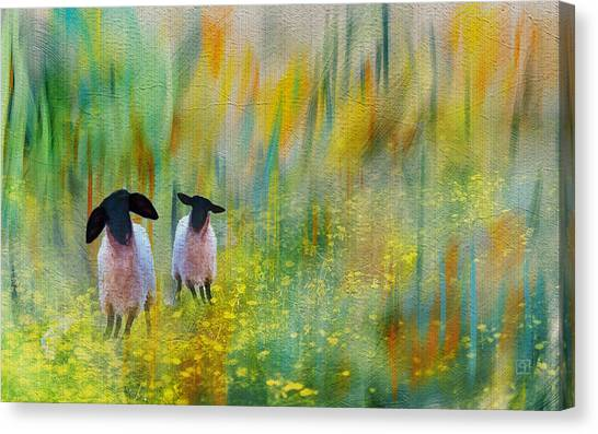 Lovely Day Sheep Canvas Print