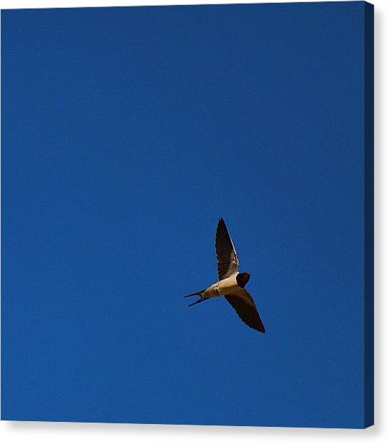 Swallows Canvas Print - Lovely Evening To Be Outside Watching by Miss Wilkinson