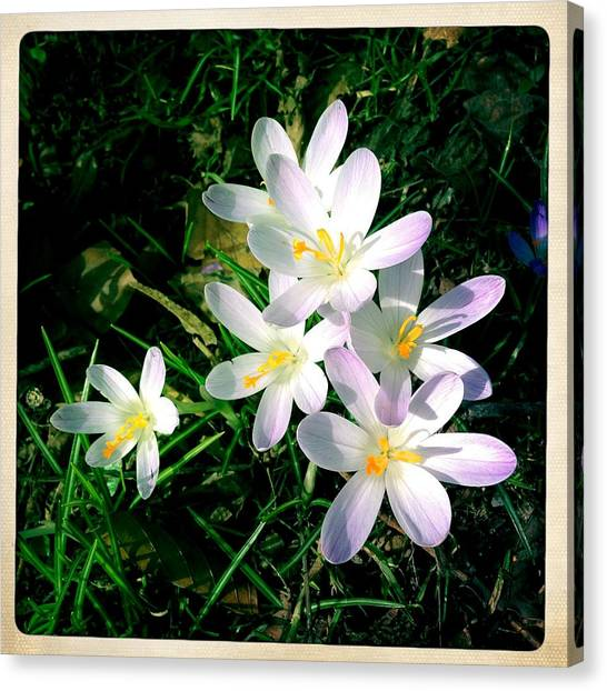 Bright Canvas Print - Lovely Flowers In Spring by Matthias Hauser