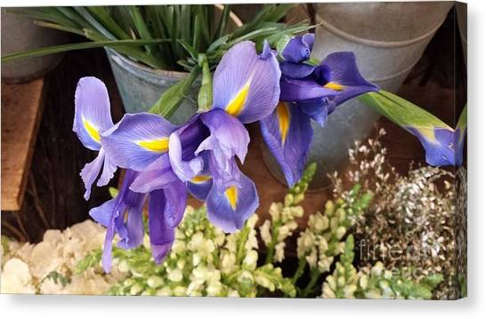 Lovely Purple Irises Canvas Print