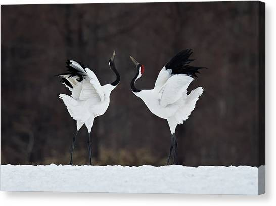 Cranes Canvas Print - Lovers by C.s. Tjandra
