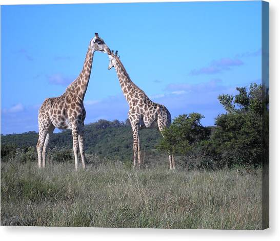 Lovers On Safari Canvas Print