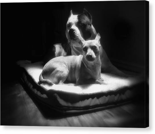 Pitbulls Canvas Print - Loving Friends 1 by Larry Marshall