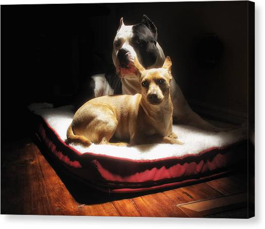 Pit Bull Canvas Print - Loving Friends Color by Larry Marshall