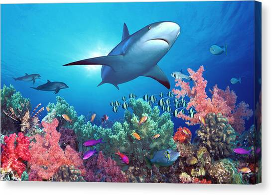 Indo Canvas Print - Low Angle View Of A Shark Swimming by Panoramic Images
