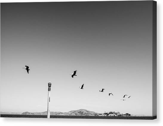Low Angle View Of Birds Flying Against Clear Sky Canvas Print by Christian Soldatke / EyeEm