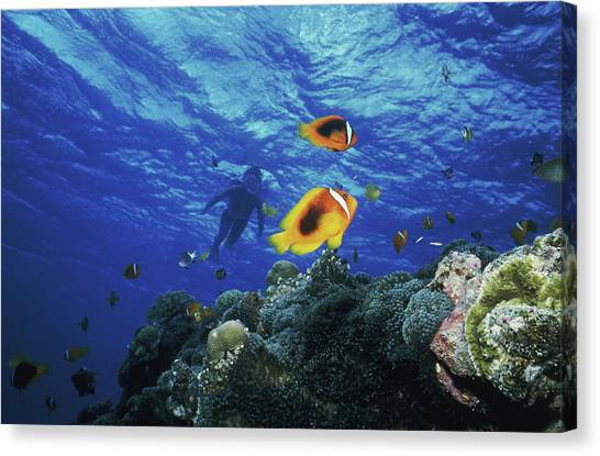 Angle Fishes Canvas Print - Low Angle View Of Fish Undersea by Panoramic Images