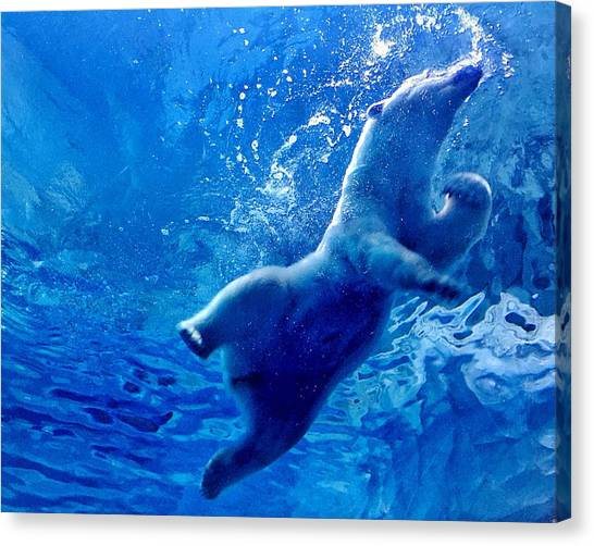 Low Angle View Of Polar Bear Swimming Canvas Print by Yumeng Lin / Eyeem