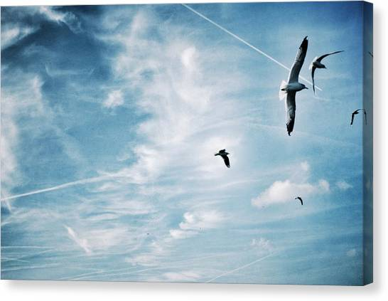Low Angle View Of Seagulls Flying Canvas Print by Mark Mwamba / Eyeem