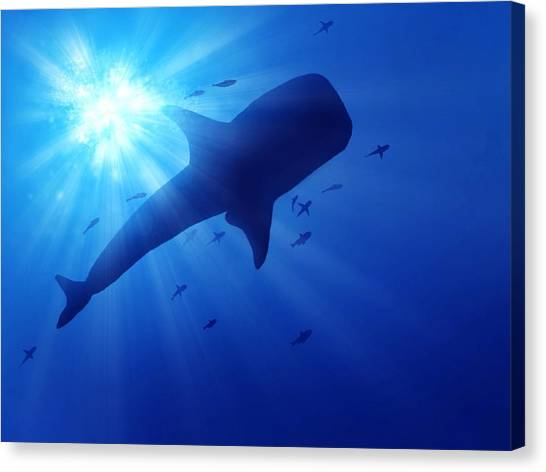 Low Angle View Of Whale Swimming In Sea Canvas Print by Stijn Dijkstra / Eyeem