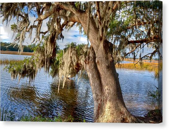 Low Country Creek Canvas Print