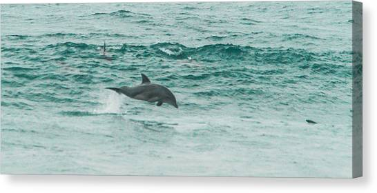 Bottlenose Dolphins Canvas Print - Low Flying by Alistair Lyne