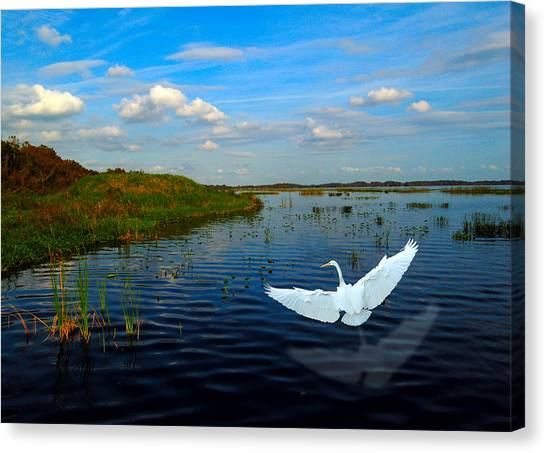 Low Flying Bird Canvas Print by Fred Leavitt