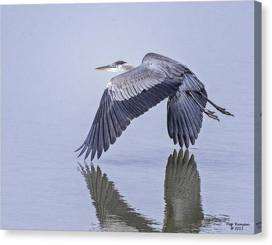 Canvas Print - Low Flying Heron by Peg Runyan