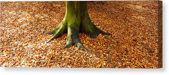 Fallen Leaf Canvas Print - Low Section View Of A Tree Trunk by Panoramic Images