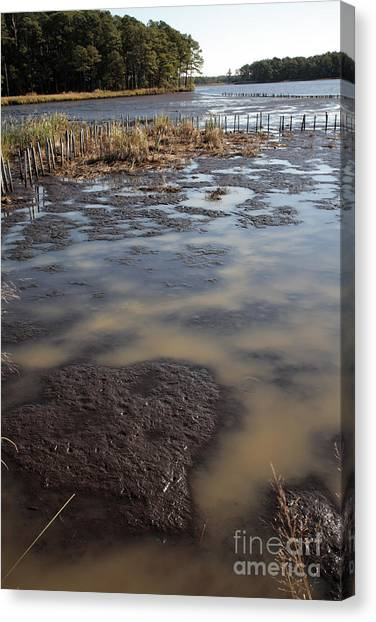 Low Tide At Blackwater Wildlife Refuge In Maryland Canvas Print