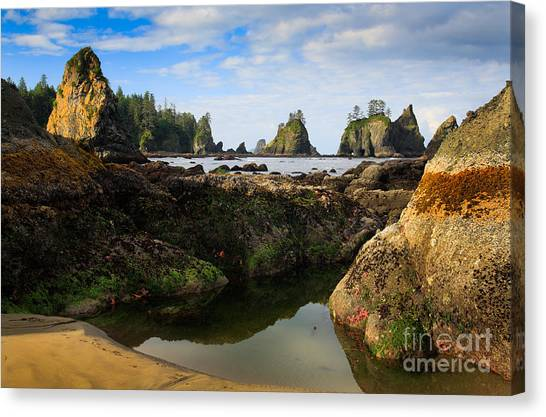 Olympic Peninsula Canvas Print - Low Tide At The Arches by Inge Johnsson