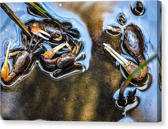 Low Tide Breakfast  Canvas Print