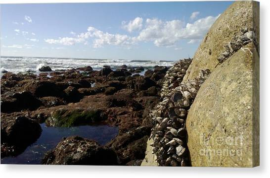 Low Tide Cabrillo National Monument Canvas Print