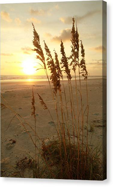 Low Tide Canvas Print by Jose Rodriguez