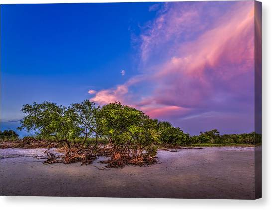 Thunder Bay Canvas Print - Low Tide Mangrove by Marvin Spates