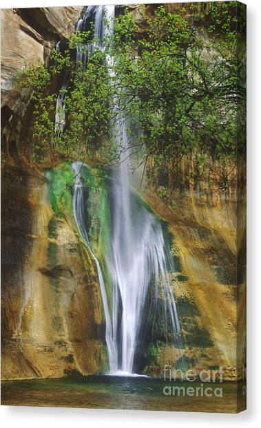 Canvas Print featuring the photograph Lower Calf Creek Falls Escalante Grand Staircase National Monument Utah by Dave Welling