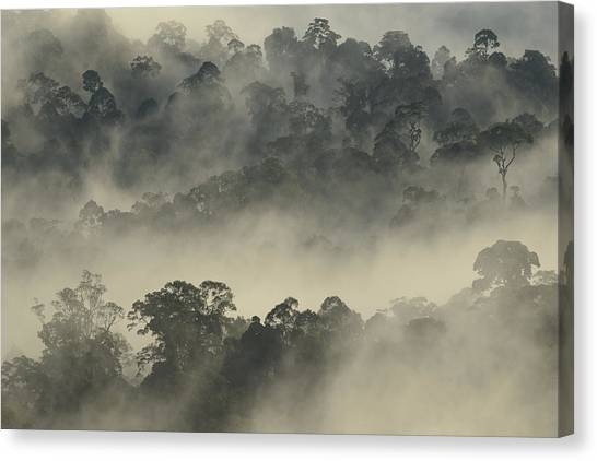 Tropical Rainforests Canvas Print - Lowland Primary Forest At Sunrise by Ch'ien Lee