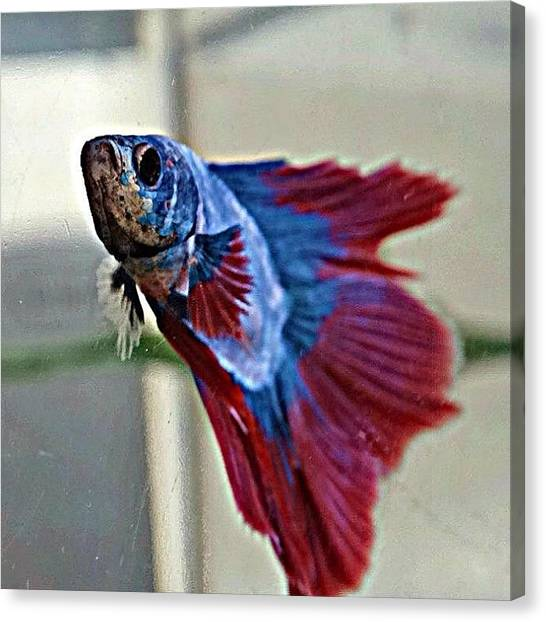 Tropical Fish Canvas Print - Lucien The Model by Katie Phillips