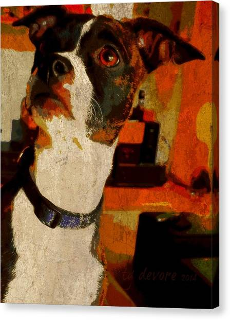 Lucy 7 Canvas Print by Tg Devore