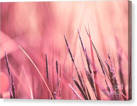 Weed Canvas Print - Luminis - S09c - Pink by Variance Collections