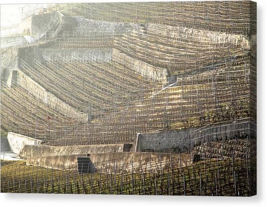 Luminous Lavaux Vineyards  Canvas Print