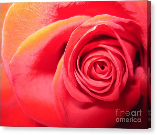 Luminous Red Rose 1 Canvas Print