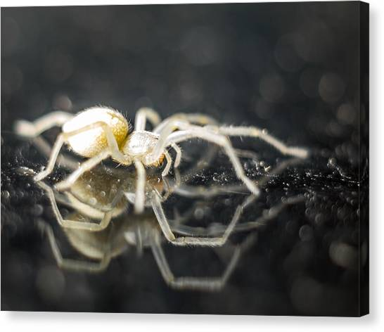 Luminous Spider Canvas Print by Carl Engman