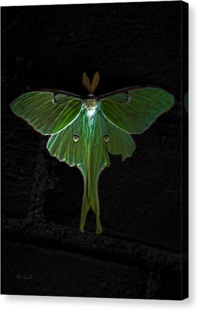 Biology Canvas Print - Lunar Moth by Bob Orsillo