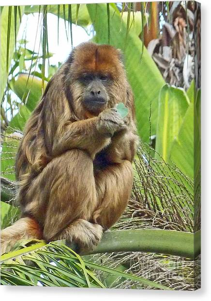 Lunch Time - Santa Ana Zoo Canvas Print