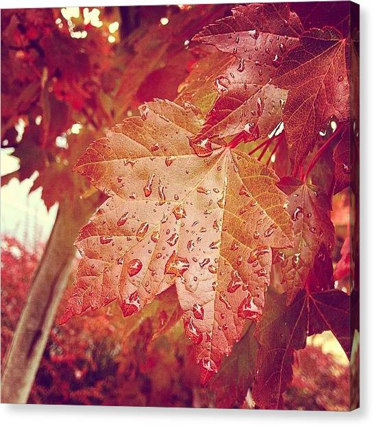 Autumn Leaves Canvas Print - Raindrops On Red Leaves by October Glow Photography