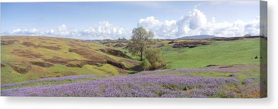 Table Mountain Canvas Print - Lupine Field With Mountain by Panoramic Images