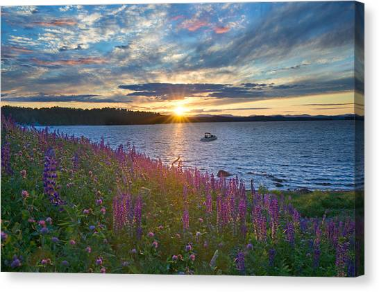 Lupine Sunset On Long Lake Canvas Print