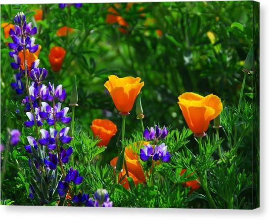 Lupines And Poppies Canvas Print