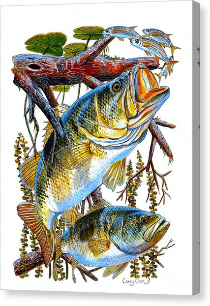 Freshwater Canvas Print - Lurking Bass by Carey Chen