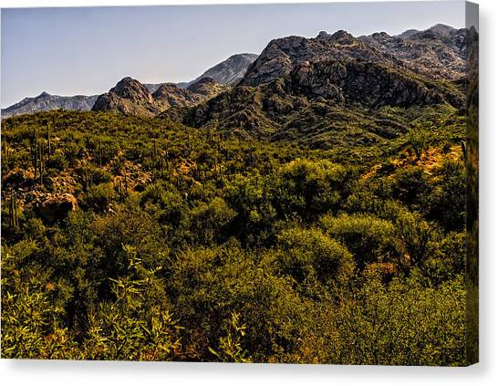Lush Foothills No.1 Canvas Print